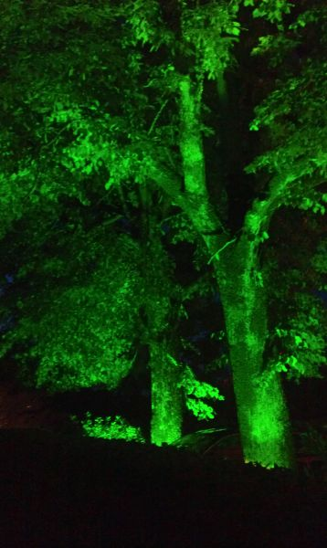 green_trees